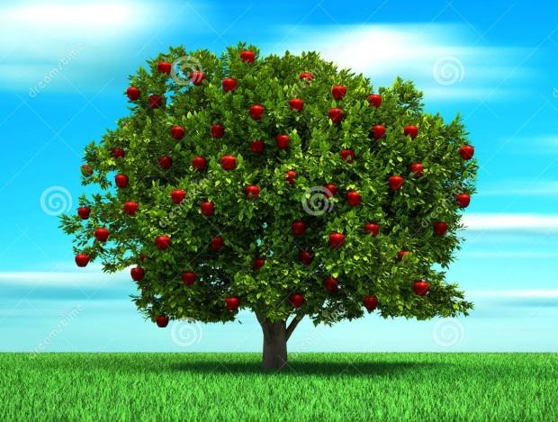 fruto.jpg